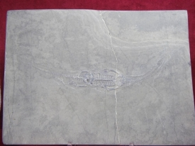 KEICHOUSAURUS HUI REPTILE - 9