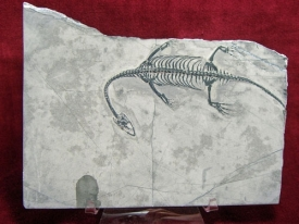 KEICHOUSAURUS HUI REPTILE-14