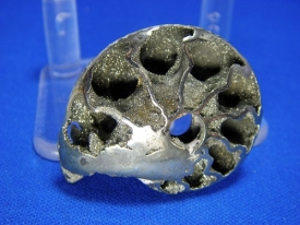 PYRITE AMMONITE  #9