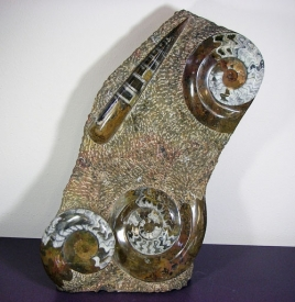 AMMONITE SCULPTURE #10