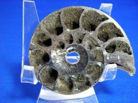 PYRITE AMMONITE  #19