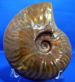 AMMONITE WITH RED MOTHER OF PEARL-6