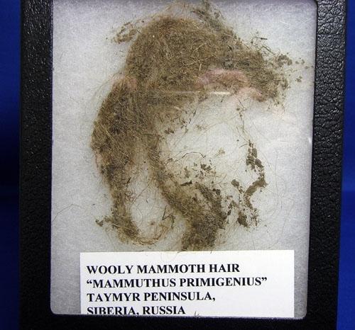 WOOLLY MAMMOTH HAIR-7