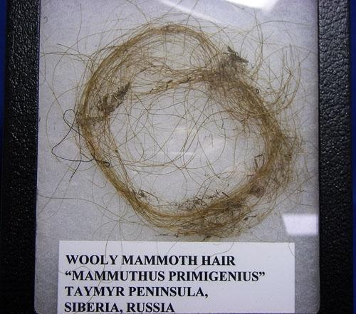 WOOLLY MAMMOTH HAIR-10