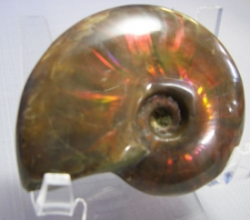 AMMONITE WITH RED MOTHER OF PEARL-14